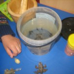 showing tadpoles their life cycle!