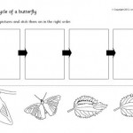 butterfy-life-cycle-1