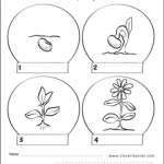 life-cycle-of-a-plant-activity-worksheet